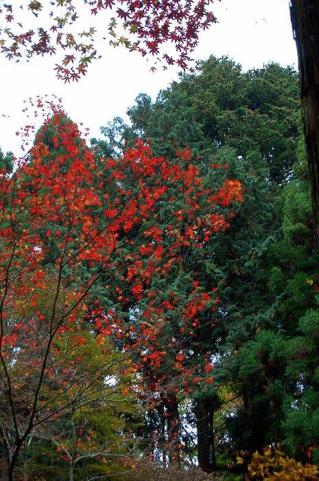 ♪京都~大原三千院♪_c0057390_20481957.jpg