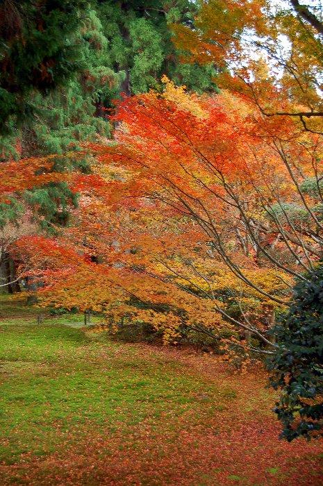 ♪京都~大原三千院♪_c0057390_2048750.jpg