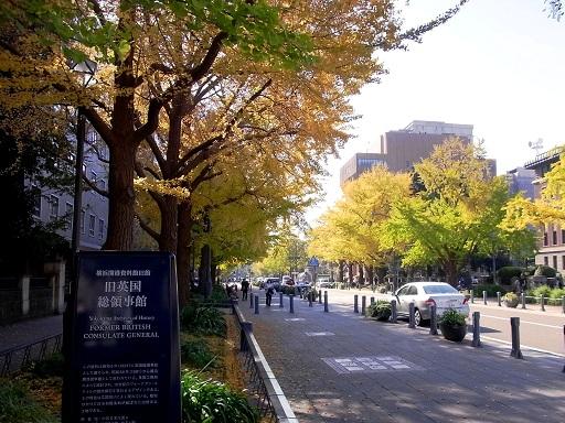 銀杏の黄葉@横浜日本大通り_c0192215_17472353.jpg