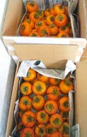 柿収穫!なぜかスイカも…_d0157021_1711694.jpg