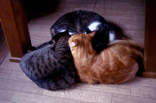 巴 猫団子。_f0114346_21351675.jpg