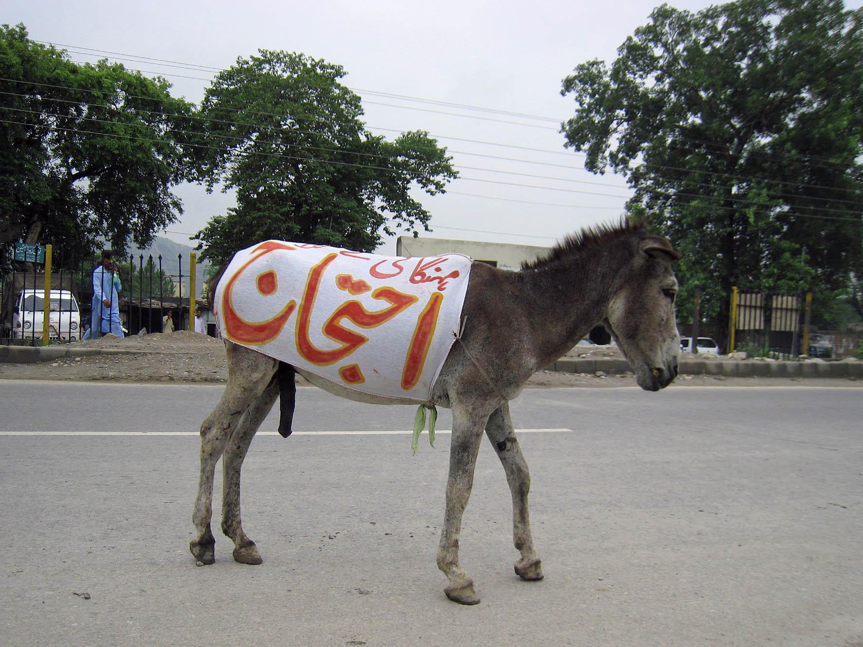 すべてのものが物価高で、庶民はほとほと嫌になってるパキスタン。きっと持ち... パキスタンのロバ