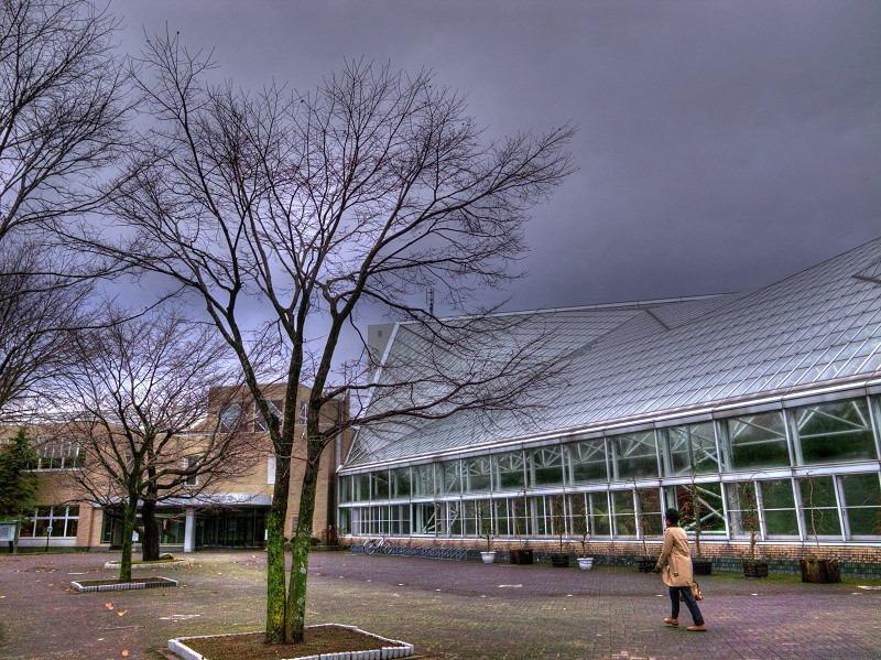 朝の公園 図書館へ _a0160581_17573053.jpg