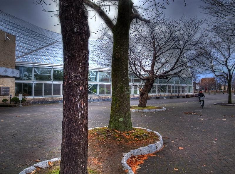 朝の公園 図書館へ _a0160581_17574868.jpg