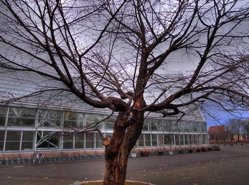 朝の公園 図書館へ _a0160581_17583100.jpg