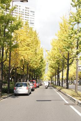 なにわ筋の街路樹_f0202682_15535869.jpg