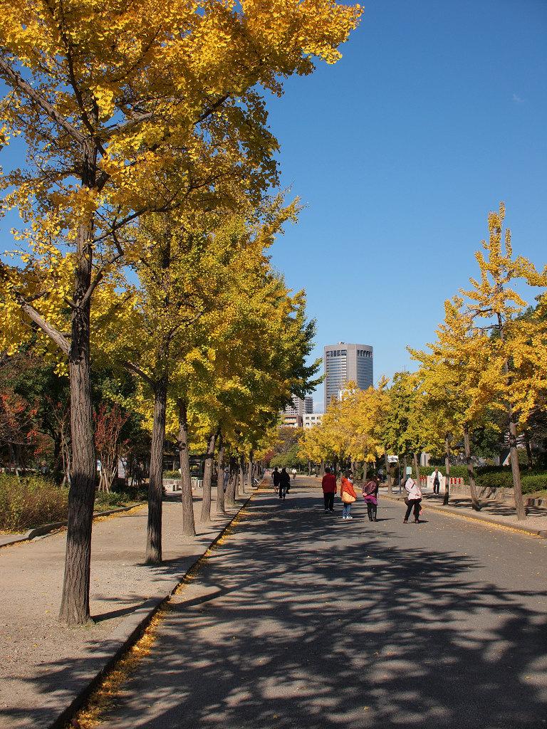 「大阪城公園の銀杏」_a0133692_15452982.jpg