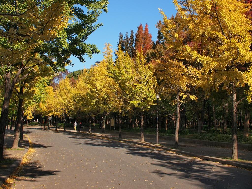 「大阪城公園の銀杏」_a0133692_1554191.jpg