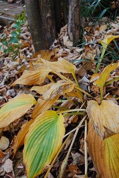 庭の秋色を集めて…_c0124100_23444676.jpg
