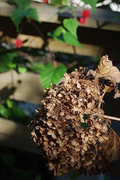 庭の秋色を集めて…_c0124100_23445745.jpg