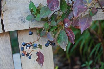 庭の秋色を集めて…_c0124100_23451243.jpg