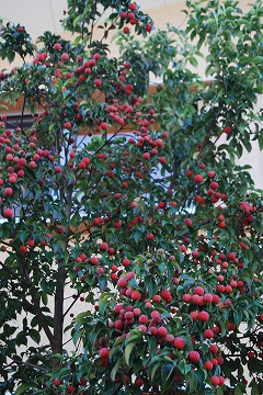 庭の秋色を集めて…_c0124100_23455144.jpg