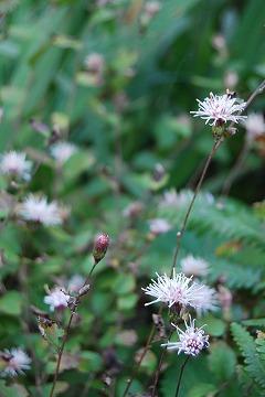 庭の秋色を集めて…_c0124100_23463331.jpg
