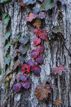 庭の秋色を集めて…_c0124100_23465333.jpg