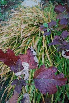 庭の秋色を集めて…_c0124100_2347389.jpg
