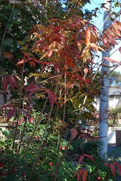 庭の秋色を集めて…_c0124100_23505490.jpg