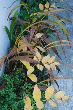 庭の秋色を集めて…_c0124100_23511053.jpg
