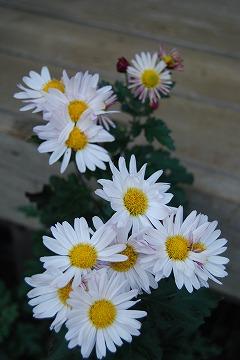 庭の秋色を集めて…_c0124100_23513991.jpg