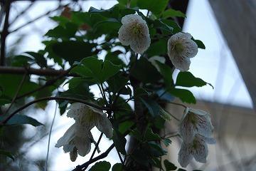 庭の秋色を集めて…_c0124100_23515127.jpg