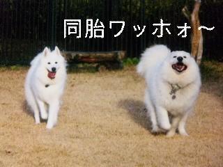 11月25日のお友達_d0148408_1744968.jpg