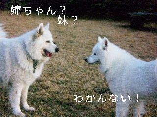11月25日のお友達_d0148408_1744981.jpg