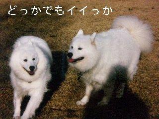 11月25日のお友達_d0148408_1744986.jpg