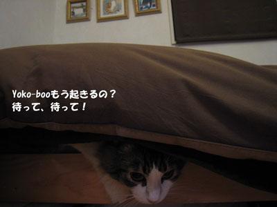 e0195115_195412.jpg