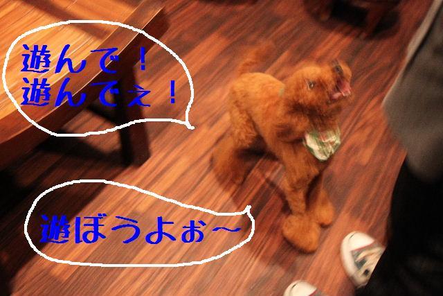 b0130018_912810.jpg