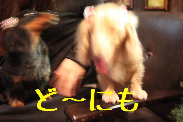 b0130018_973861.jpg