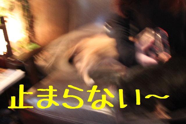 b0130018_974272.jpg