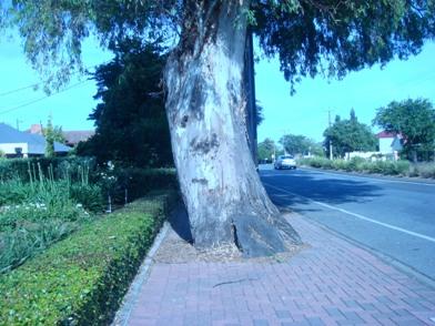 すごい木たち。_f0234165_12123556.jpg