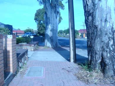 すごい木たち。_f0234165_12124884.jpg