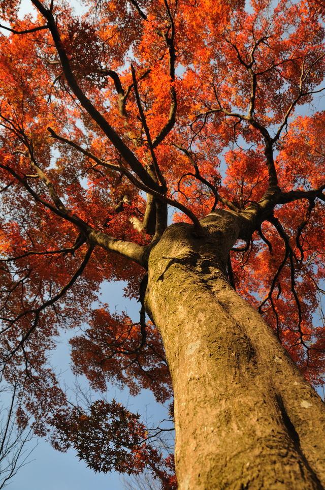 益岡公園   _b0223668_6414871.jpg