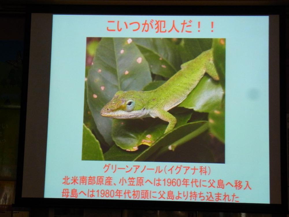 丸の内さえずり館セミナー「小笠原の昆虫とその保護」に行ってきました。_a0146869_6475285.jpg