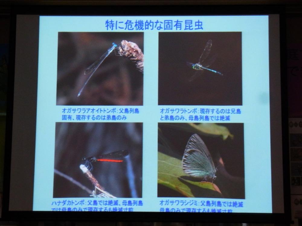 丸の内さえずり館セミナー「小笠原の昆虫とその保護」に行ってきました。_a0146869_6482422.jpg