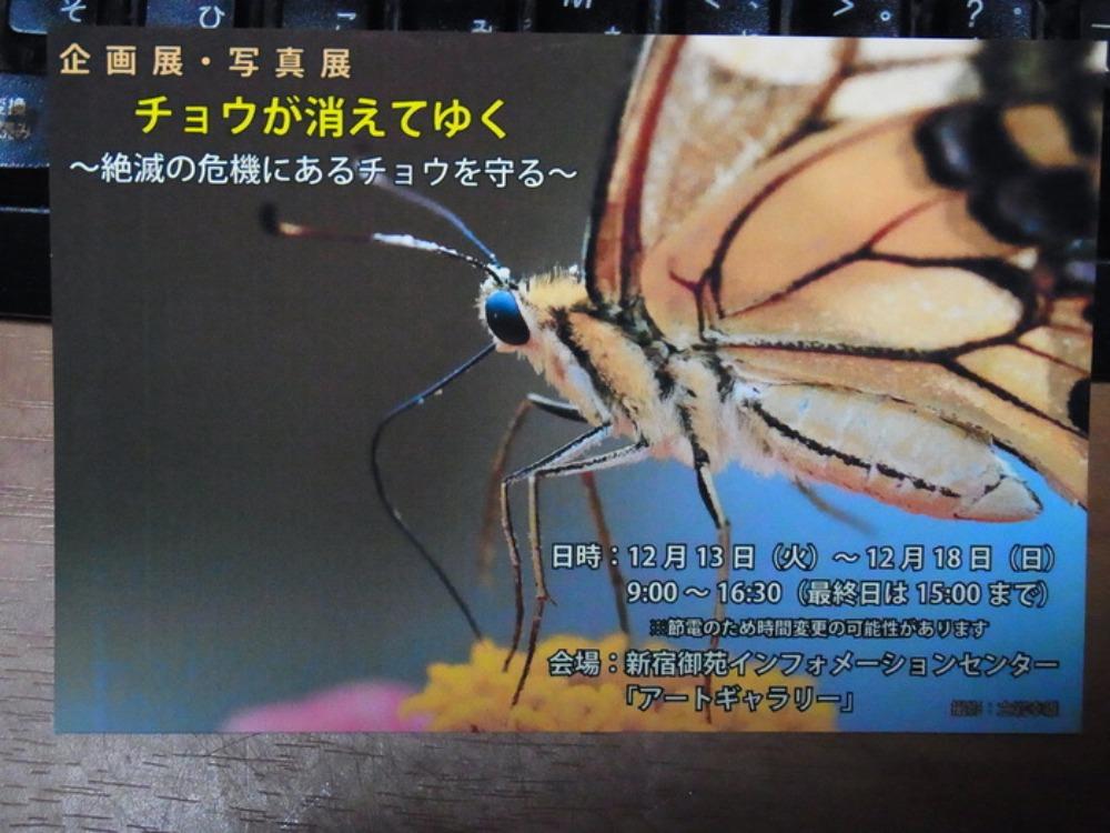 丸の内さえずり館セミナー「小笠原の昆虫とその保護」に行ってきました。_a0146869_6503178.jpg