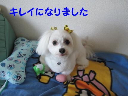 b0193480_1514574.jpg