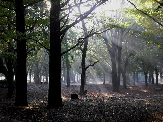 都立野川公園の紅葉 雨上がりの朝_e0165983_10302194.jpg