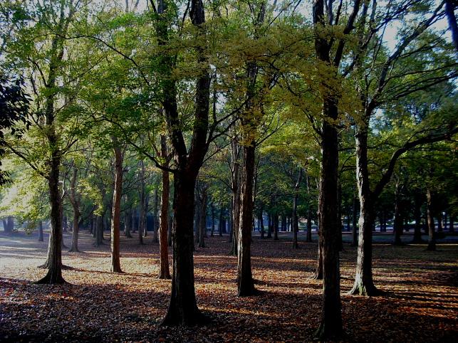 都立野川公園の紅葉 雨上がりの朝_e0165983_10322415.jpg
