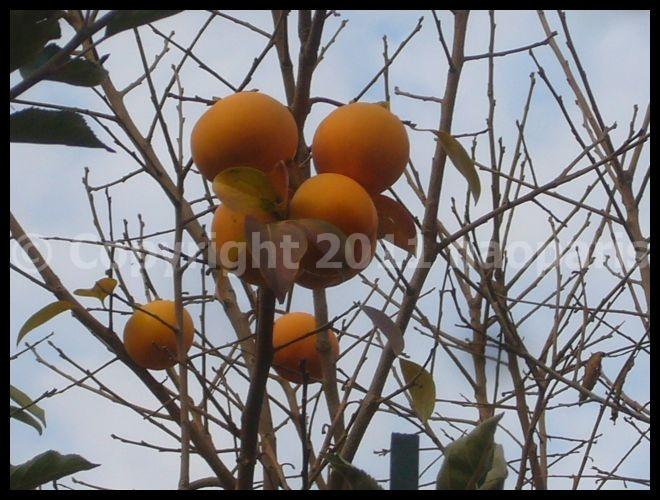 【街角の秋】11月21日リュクサンブルグ公園Jardin du Luxembourg(PARIS)_a0014299_1945783.jpg