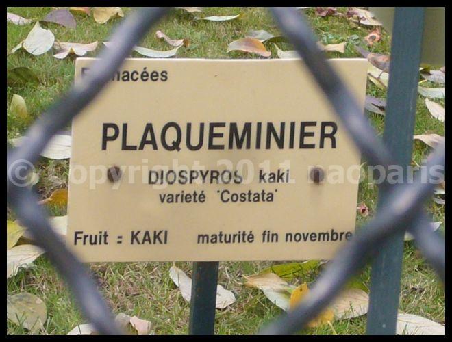 【街角の秋】11月21日リュクサンブルグ公園Jardin du Luxembourg(PARIS)_a0014299_1951738.jpg