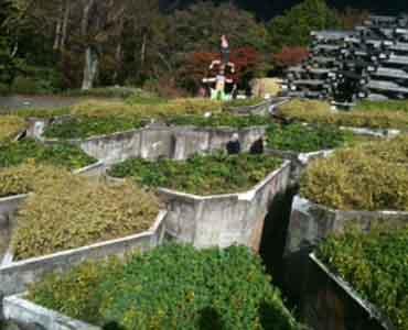 箱根一泊子連れ旅行2日目 彫刻の森&箱根湯本_e0253101_22161347.jpg