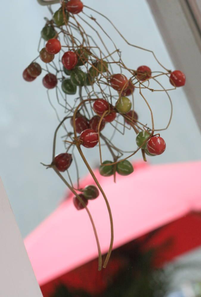 秋の終わりと冬のはじめに 紅葉と白雪 青山レ・クリスタリーヌ様の装花_a0042928_22204911.jpg