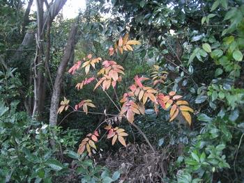 秋の里山お散歩_c0134734_0201413.jpg