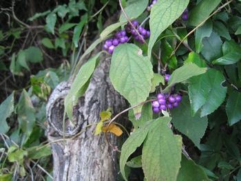 秋の里山お散歩_c0134734_0204348.jpg