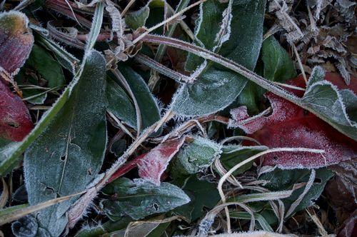 冬です これは・・・。_f0114346_1814563.jpg