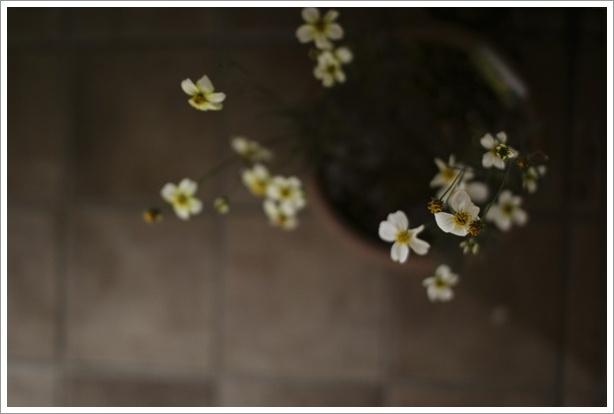 秋の終わりの花_c0157248_1115728.jpg