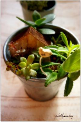 いちごのロールケーキ&多肉植物教室♪_f0193555_1723358.jpg