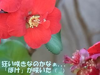 b0185771_14222851.jpg