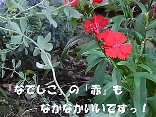 b0185771_14383273.jpg